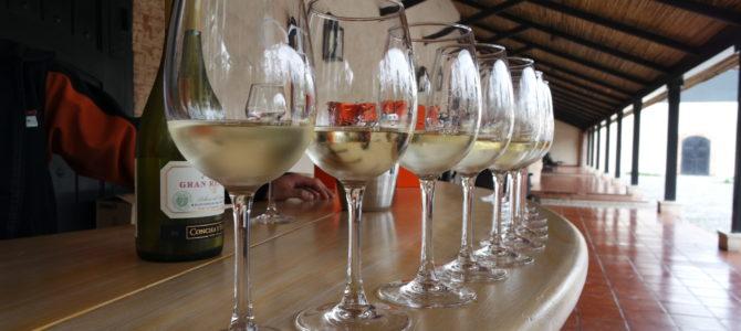 Como é visitar a vinícola Concha y Toro, no Chile