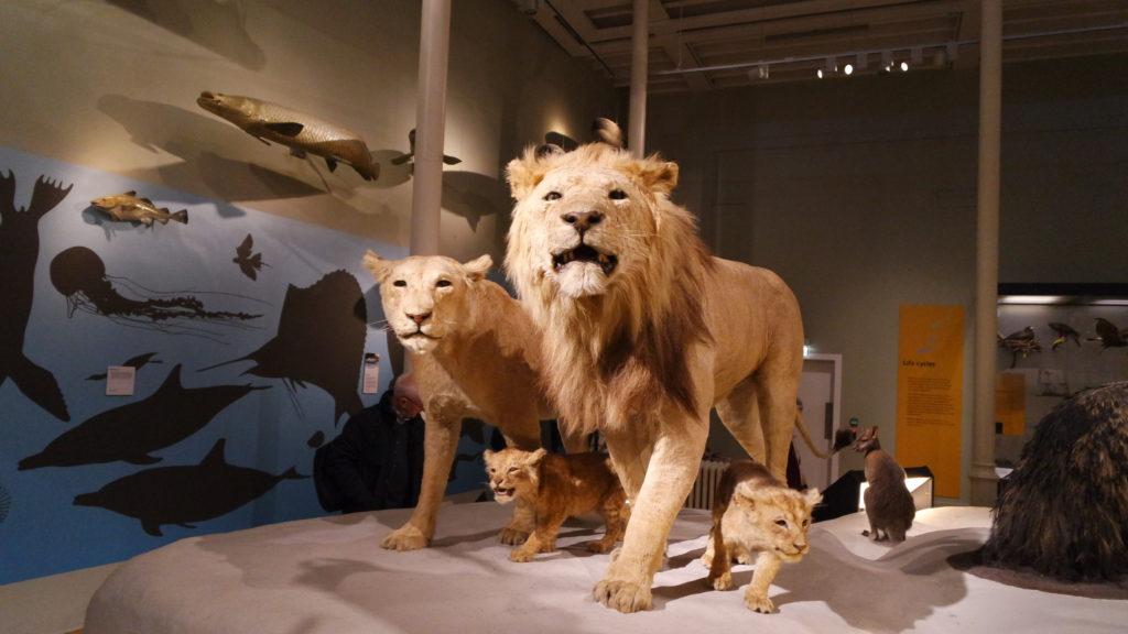 reino animal museu nacional da escócia