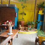 Dita Cabrita – comer bem num lugar charmoso