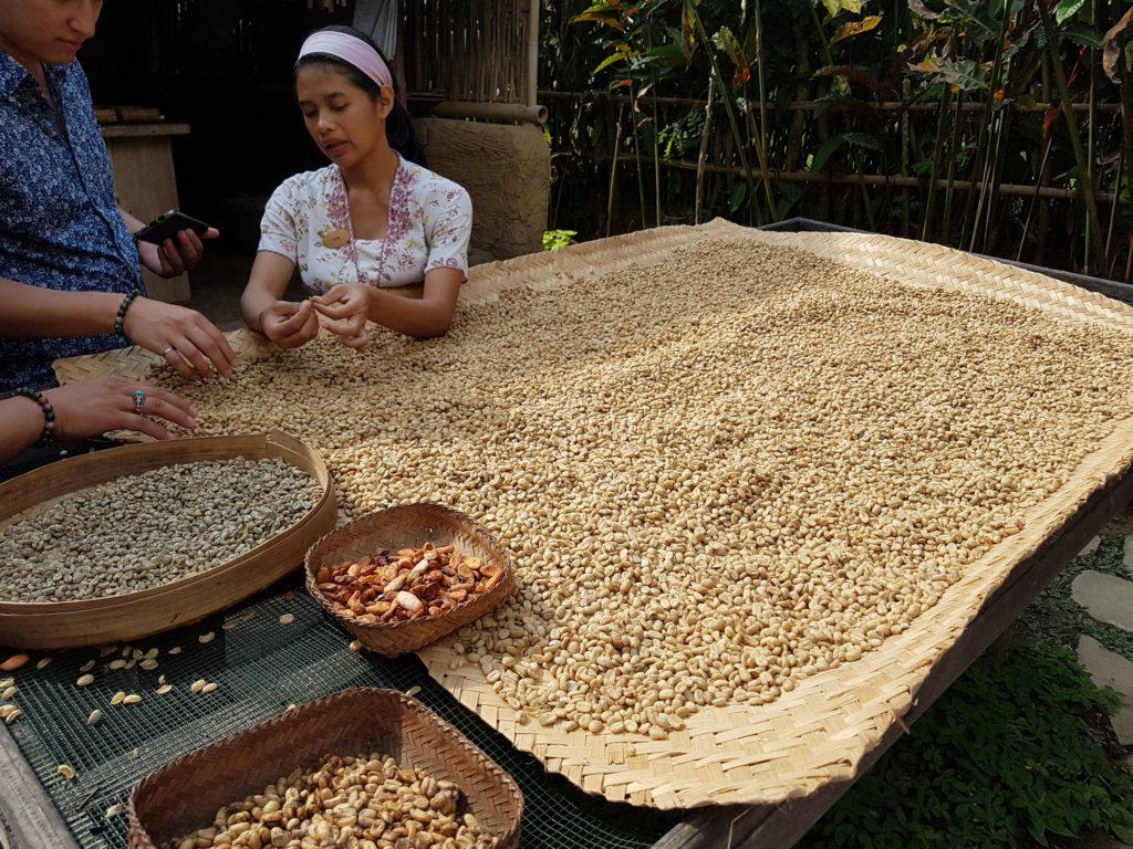 Kopi Luwak em Bali Pulina