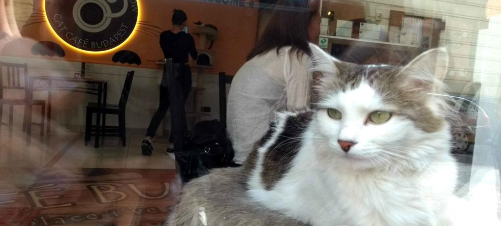 Comer e Beber em Budapeste: Cat Café Budapest