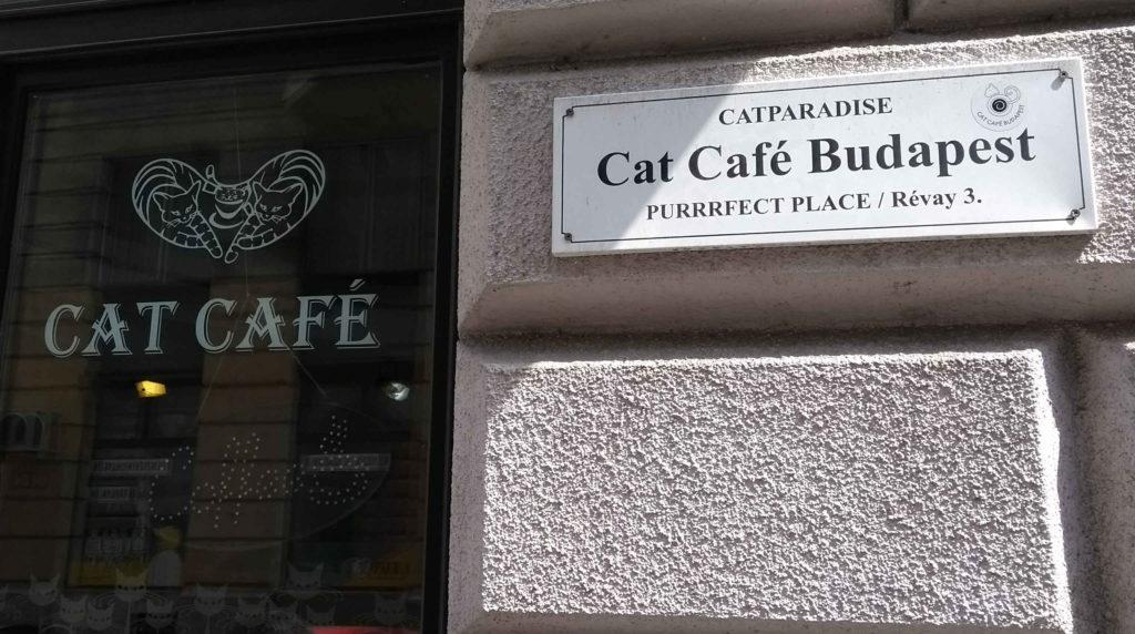 Cat Café Budapeste