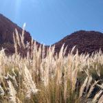 Termas de Puritama – Deserto do Atacama