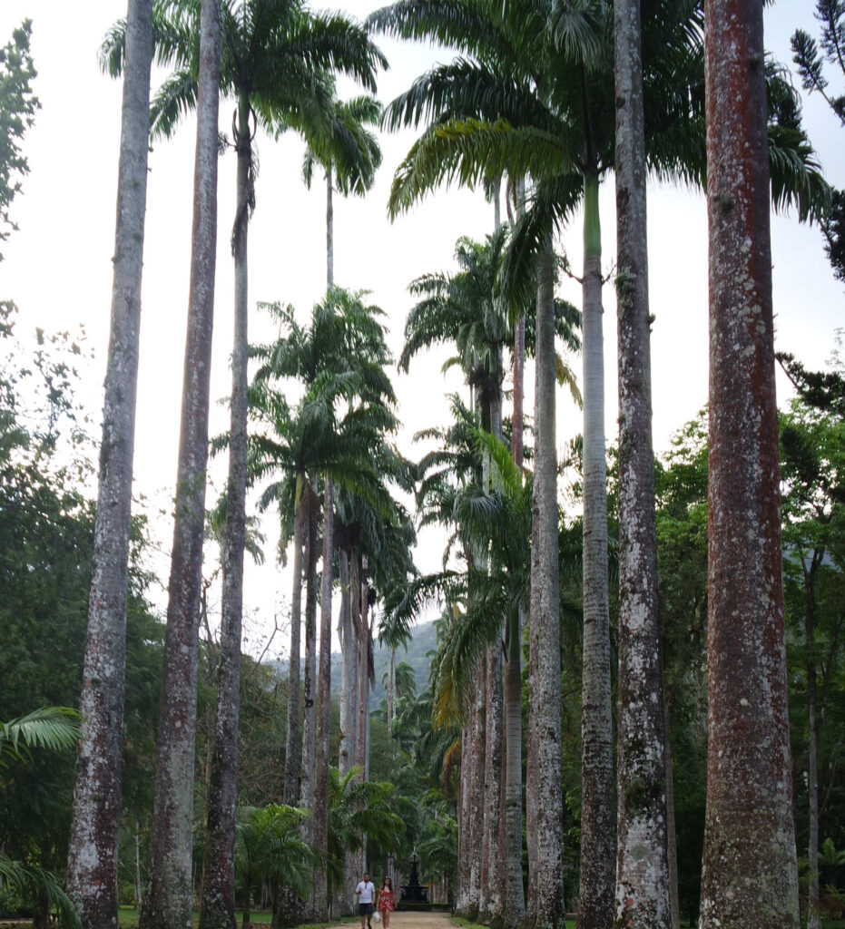Palmeiras Imperiais do jardim Botânico