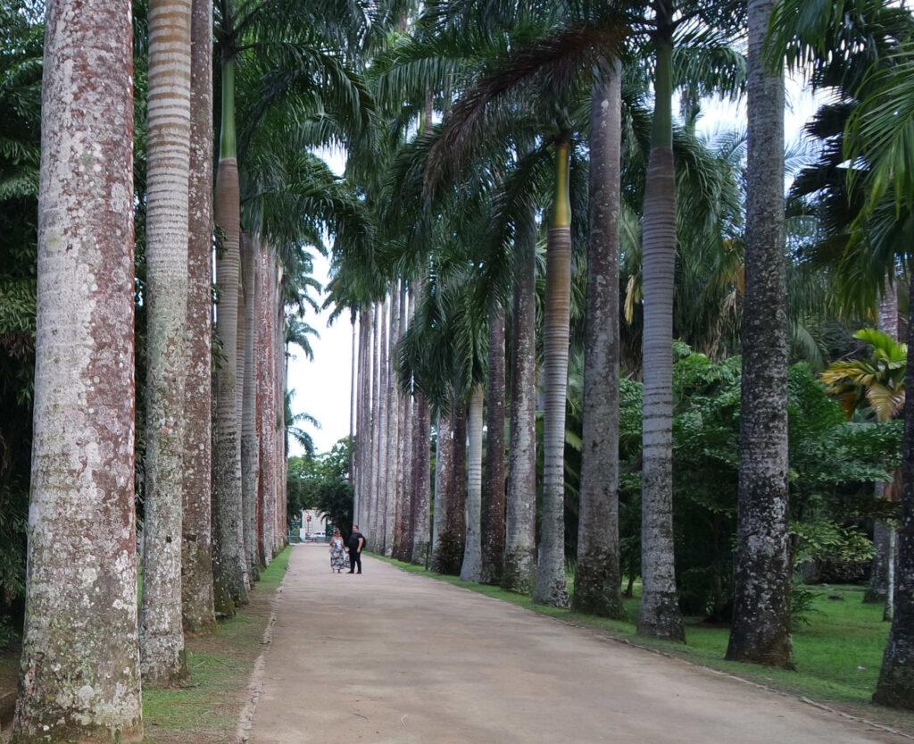 As fantásticas palmeiras imperiais