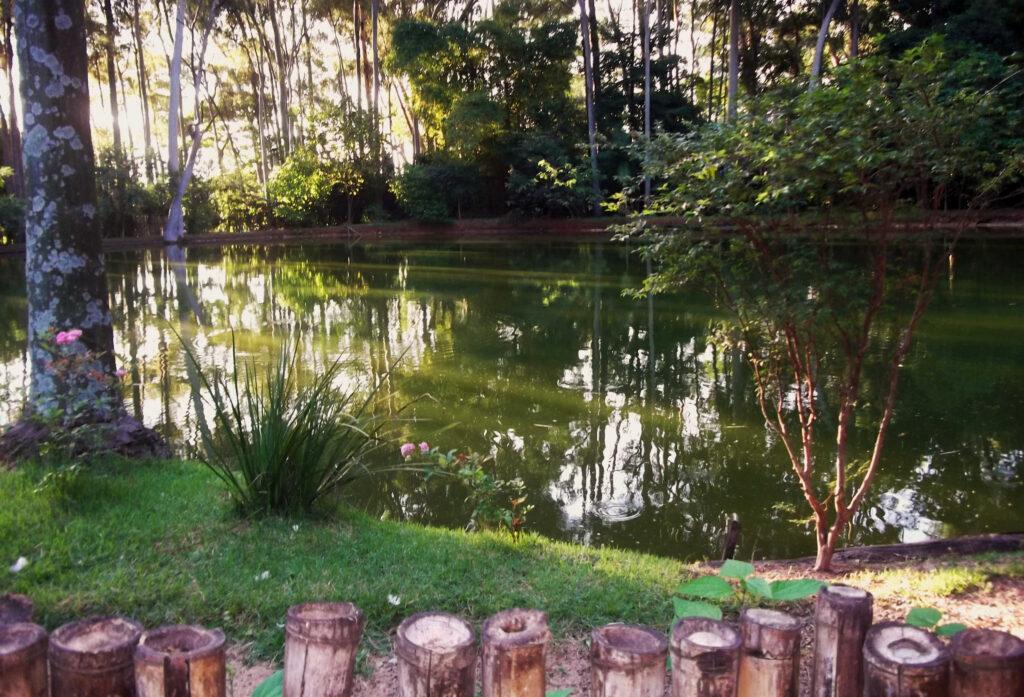Parques São Paulo: Parque do Piqueri
